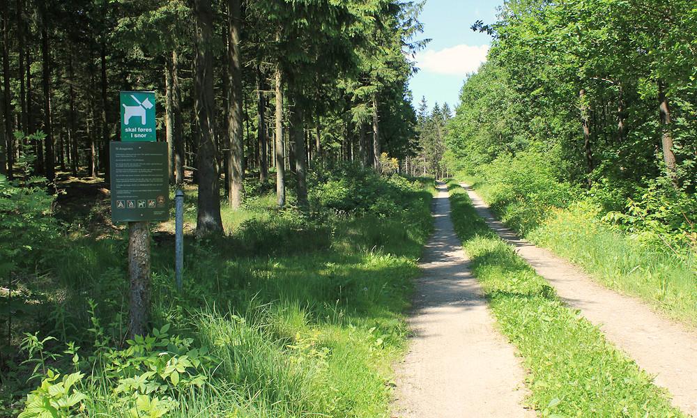 Naturen omkring Grønbjerg.